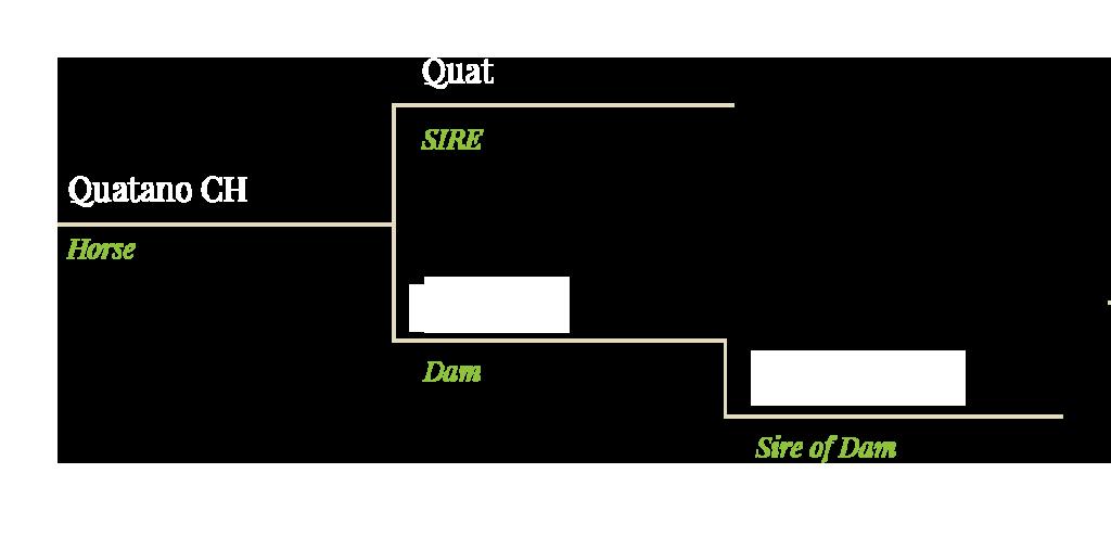Stammbaum Quatano